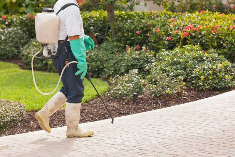 A pest control expert walking with equipment