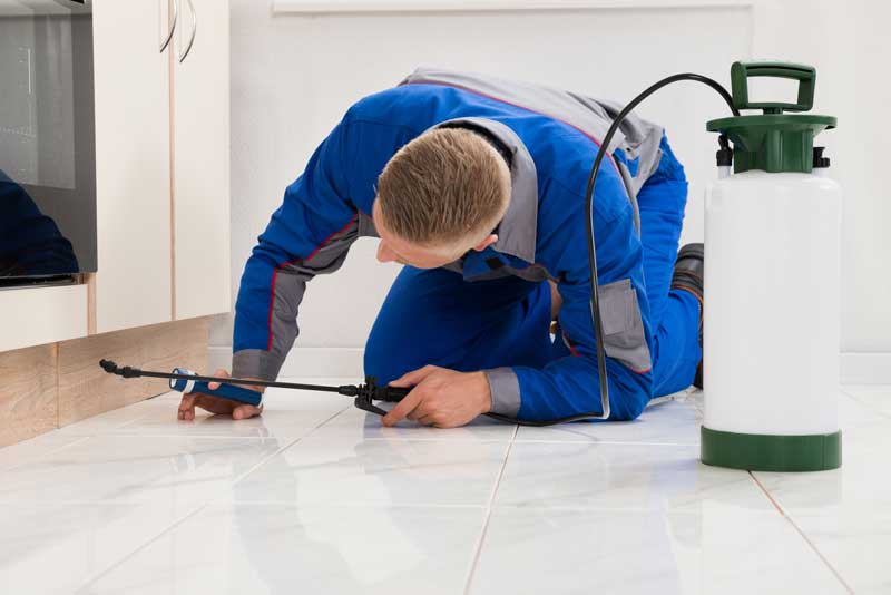 A pest control expert knelt on the floor with his equipment