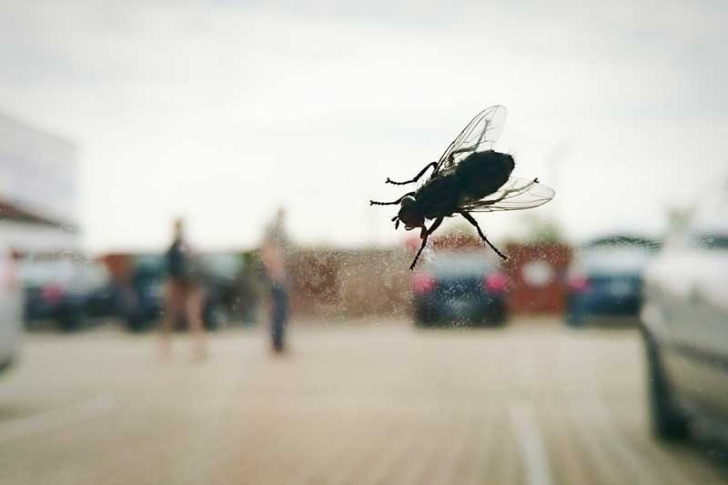 A fly on a window