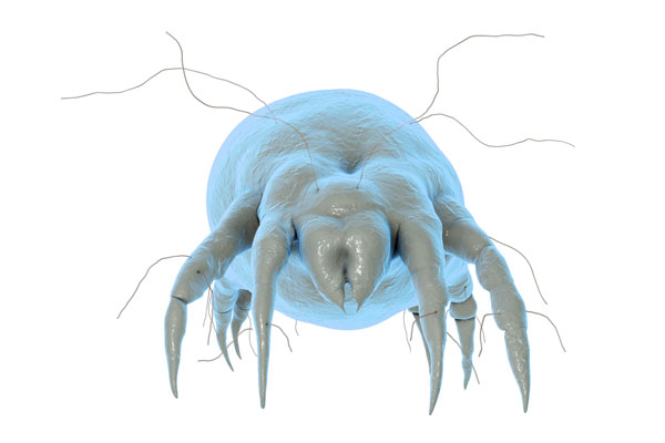 Removing Mites in Home Foundations | 3 Counties Pest Control